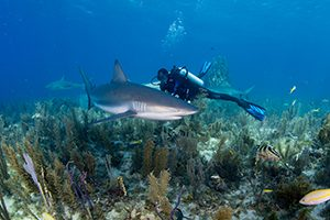 Image of Shark and Diver - South Tampa Dive Shop Specialties Courses