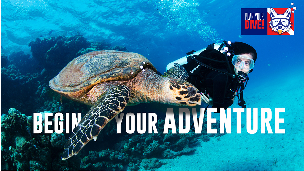 Underwater Image of Woman Diving with Turtle - South Tampa Dive Shop - Adventure Outfitters